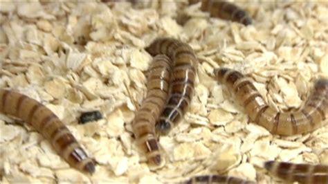 bed bug video shocking video reveals bed bug infestation cnn video