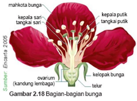 mari belajar ipa perkembangbiakan generatif  tumbuhan