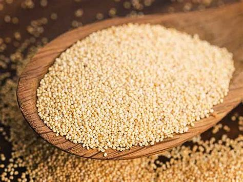 Poppy Seeds Khuskhus For And Health And Personality Grooming by What Are The Important Health Benefits Of Khus Khus Lifealth