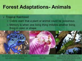 what are some plant adaptations in the tropical rainforest habitats and adaptations ppt