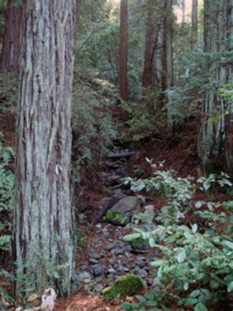Napa County Property Records Fierce Fires Pose Threats To Forests Water Save The Redwoods League
