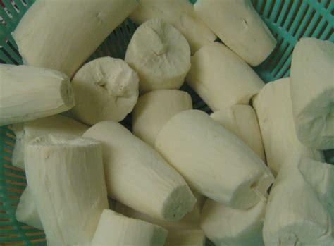 cassava tapioca yuca mandioca manioc maniok