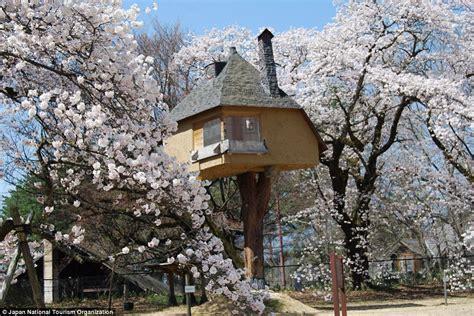 worlds  extraordinary tree houses revealed