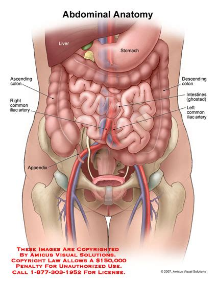 Diagram Of Pelvic Area