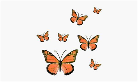 butterfly butterflies butterflys bug insect insects