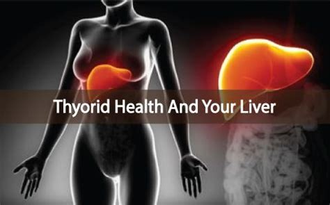 Thyroid And Liver Detox by A Healthy Liver Depends On A Healthy Thyroid Gland Read