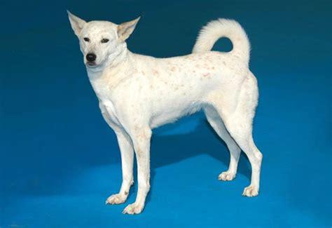ckc dogs canadian kennel club club canin canadien