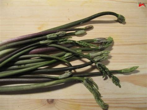 come cucinare gli asparagi bolliti asparagi selvatici ricette asparagi