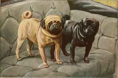 pug vintage 1000 images about pug on black pug puppies pug and pug