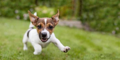 alimentazione cani piccola taglia l alimentazione per cani sensibili di piccola taglia