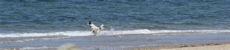 friendly hotels cape cod friendly hotels on cape cod capebeachdog autos post