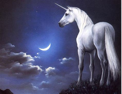 imagenes de unicornios y caballos unicornios taringa