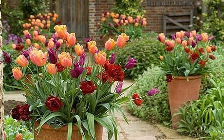 best all year plants container gardening five of the best flowers for outdoor pots telegraph