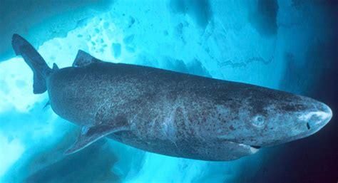 requin dormeur un tr 232 s requin dormeur 233 224 l int 233 rieur d un
