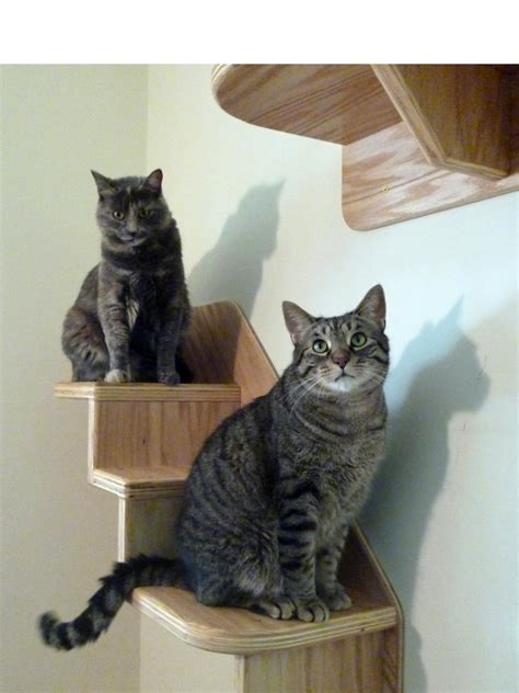 The Best Cat Condos Beds And Shelves Diy Cat Bookshelves