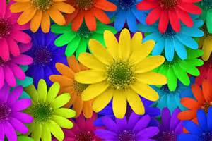 colorful flower colorful flower ogq backgrounds hd