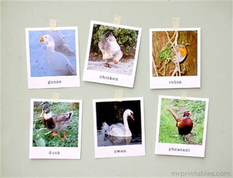 printable real animal flash cards animal flash cards in polaroid style mr printables