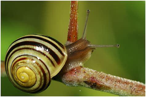 backyard snails rage s quot bugography quot 2008 h ard forum