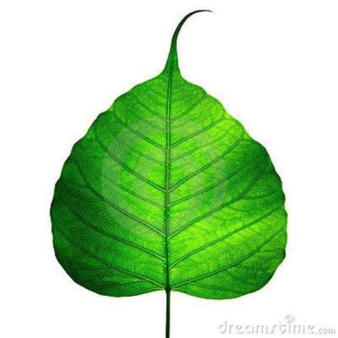 Bodhi Leaf the world s catalog of ideas