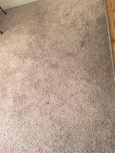 mildew smell in rug what does carpet mold smell like carpet vidalondon