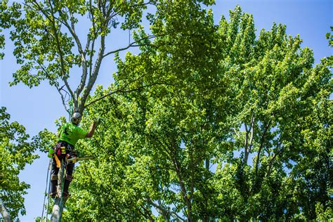 rigging line alpine tree care