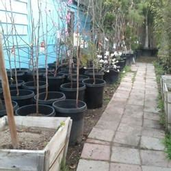Garden Grove Euclid Euclid Nursery Nurseries Gardening Yelp