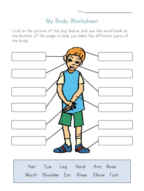 printable activities for children parts of the body body parts worksheet for kids