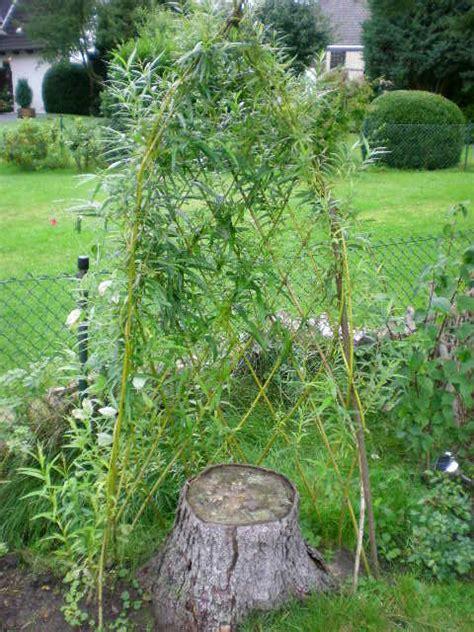 Garten Sichtschutz Pflanzen 172 by Rankgitter Und Kugeln Aus Weiden Mein Sch 246 Ner Garten Forum