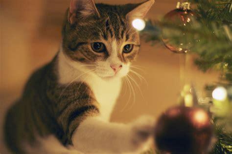 imagenes navidad gatitos imagenes de gatitos en navidad 21 12 15