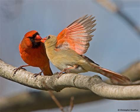 do birds mate for life 187 bird watcher s digest