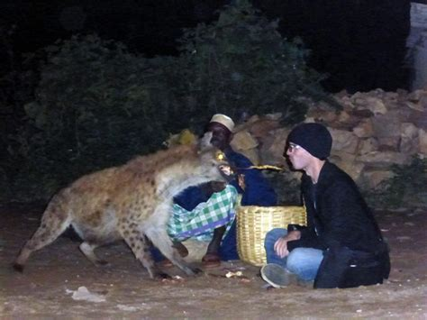 dog will only eat out of my hand hyenas in ethiopia will eat out of your mouth vice