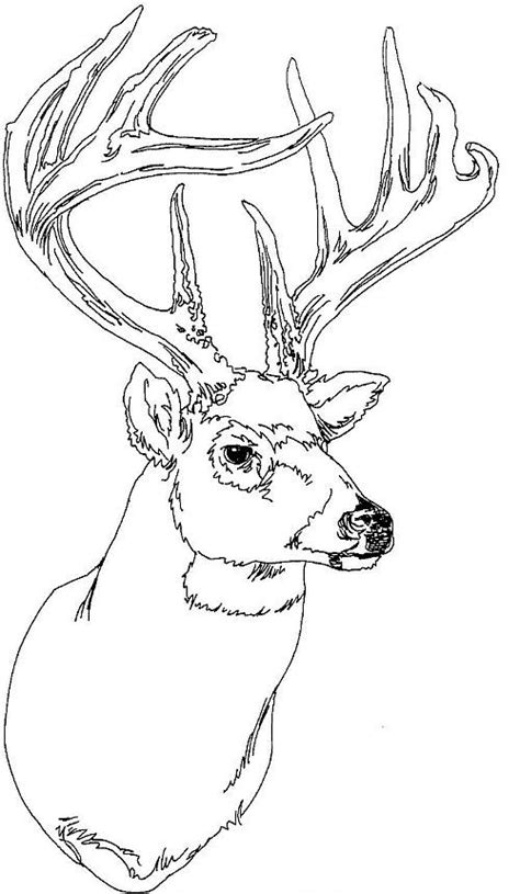 coloring page of deer head pinterest the world s catalog of ideas