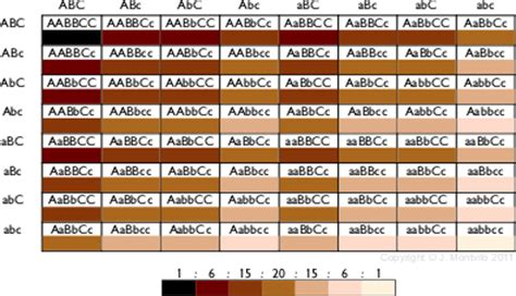 skin color genetics how many alleles are included in determining skin colour