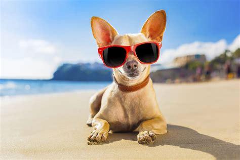 Pool Care Tips 8 pet friendly summer vacation destinations petcha