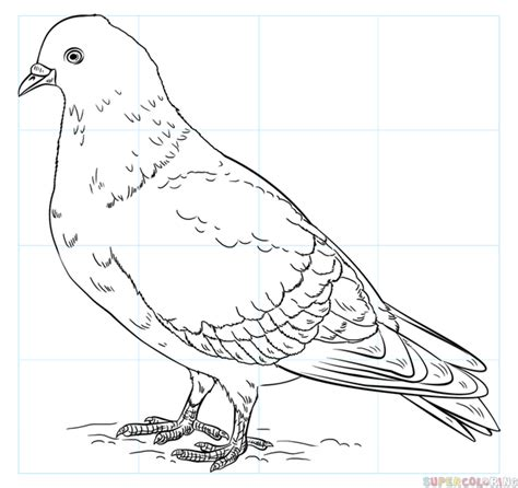 City Pigeon Drawing Www Pixshark Images Galleries