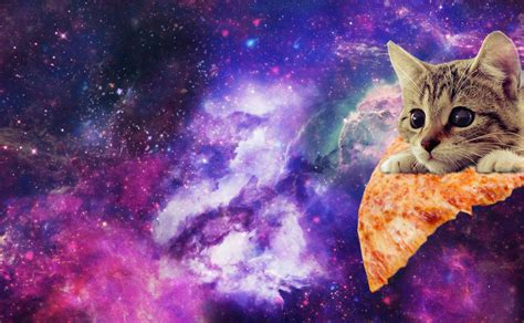 wallpaper galaxy cat space cat background pictures to pin on pinterest pinsdaddy