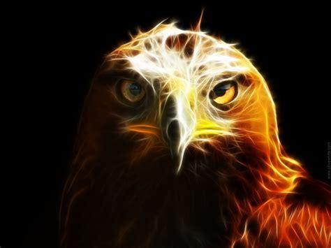 wallpaper black eagle black eagles wallpapers