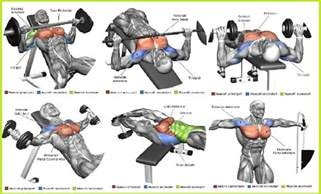 bench for exercise the top 5 chest exercises all bodybuilding