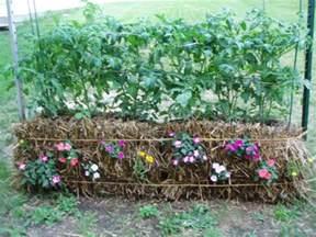 straw bale gardening how to create an amazing garden
