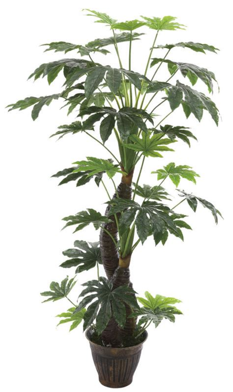 Cheap Trees - cheap artificial trees dysosma veitchii fatsia japonica