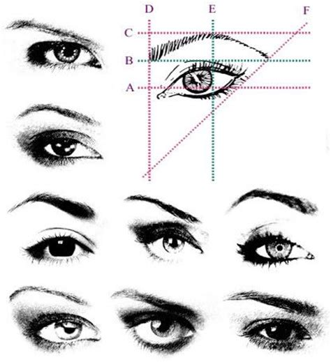 template for eyebrows 25 best ideas about different eyebrow shapes on