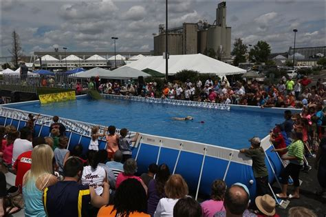 ultimate air dogs fur flies at ultimate air dogs event toledo blade