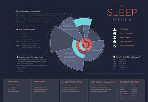 Five Stages Of Sleep Essay by The Sleep Cycle Visual Ly