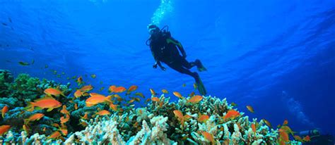 scuba dive trips chutti pk thailand scuba diving package with padi