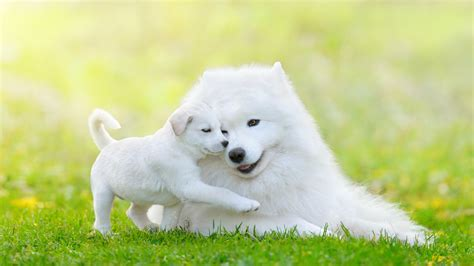 top dog breeds top 10 non shedding dogs dog breeds picture