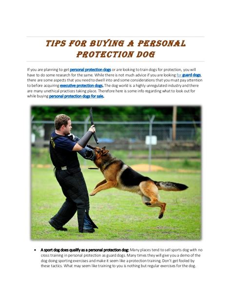 how to a for personal protection personal protection dogs