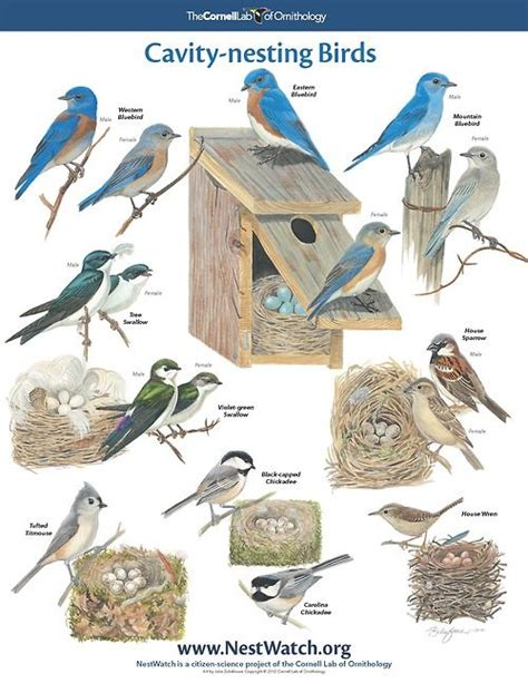 cavity nesting birds for the birds and bugs pinterest