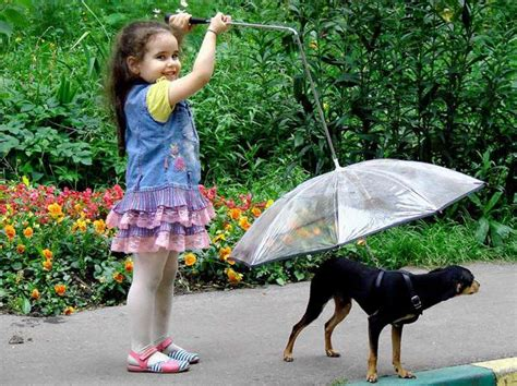 pet umbrellas adding fun  rainy days modern design idea