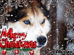 husky merry christmas picture  blingeecom