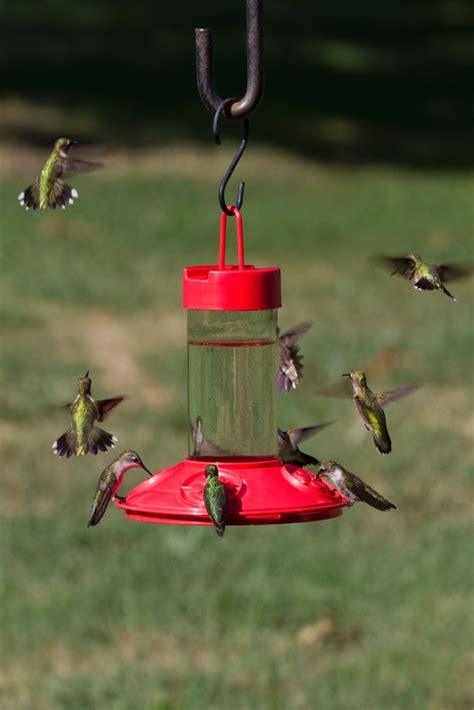 new dr jbs switchable clean hummingbird feeders 4 sizes